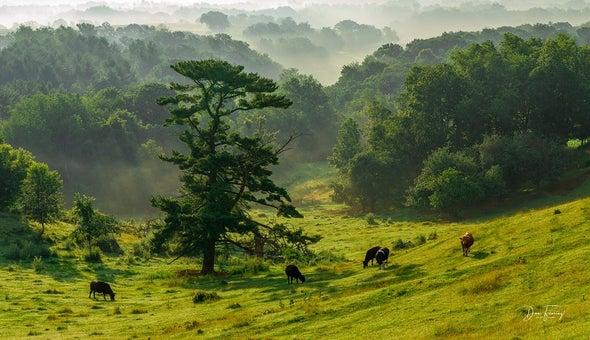 تقليل الاستهلاك يخفض «انبعاثات غازات الدفيئة لإنتاج لحوم البقر» إلى النصف