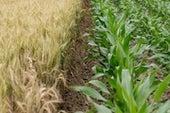تنوُّع المحاصيل يوفر حمايةً للأمن الغذائي حول العالم