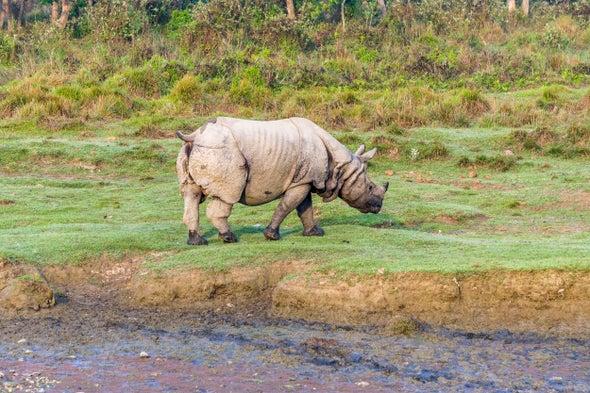 في سبيل وقف الجرائم ضد الحياة البرية، أنصار الحفاظ على البيئة يتساءلون عن أسباب الصيد غير المشروع