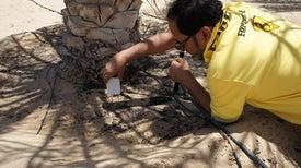 تقدير «البصمة المائية» لإنتاج التمور في دولة الإمارات