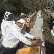 النحل يشدو