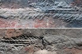 اكتشاف حيوان يُعتقد أنه أول مَن مشى على سطح الأرض