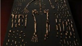 هومو ناليدي، فرع جديد محير من أسلاف البشر
