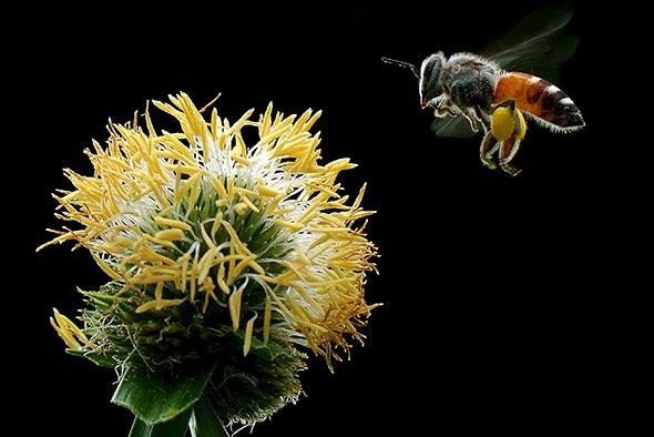 مبيدات الآفات واسعة الانتشار تفتك بنحل العسل