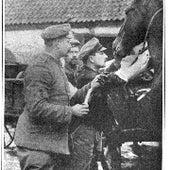 الطب لعلاج الخيول