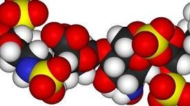 نفاذ السكريات إلى المخ في أثناء الصدمة الالتهابية يسبب فقدان الذاكرة