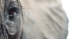 هل تحزن الحيوانات وتنتحب على موتاها؟