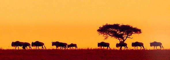 أطلس عالمي لتحديد مسارات هجرة الثدييات ذوات الحوافر