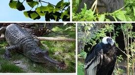 انقراض الكائنات كبيرة الحجم يهدد النظام البيئي العالمي