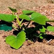 باحثون يدرسون استجابة النباتات للتغيُّر المناخي على المدى الطويل
