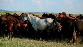 الجينوم يروي تاريخ الحصان عبر 5000 عام