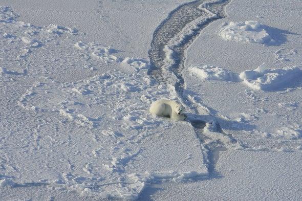 تغيُّر المناخ يجبر الدب القطبي على تغيير نمط غذائه