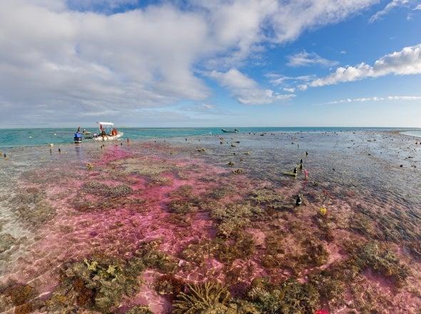 تحمُّض المحيطات يهدد نمو الشُّعَب المرجانية