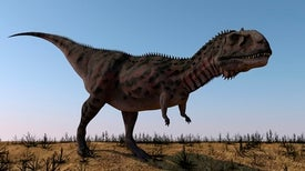 بعض الديناصورات كانت تجدد أسنانها بسرعة