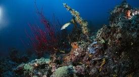 ضوضاؤنا تزعج الكائناتِ المنسيةَ في قاع البحر