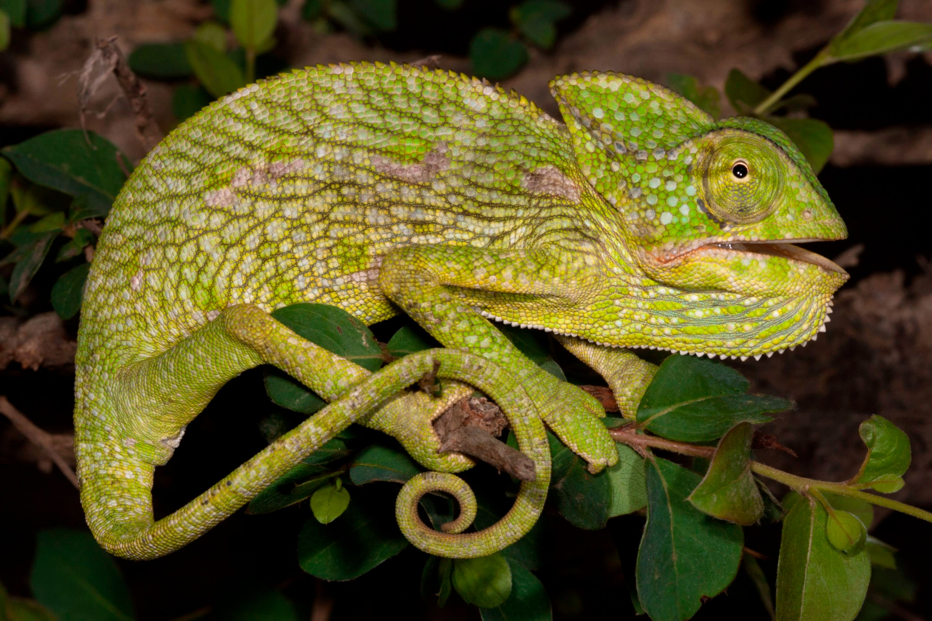 Looking Past the Scales: The Truth about Reptilian Behavior