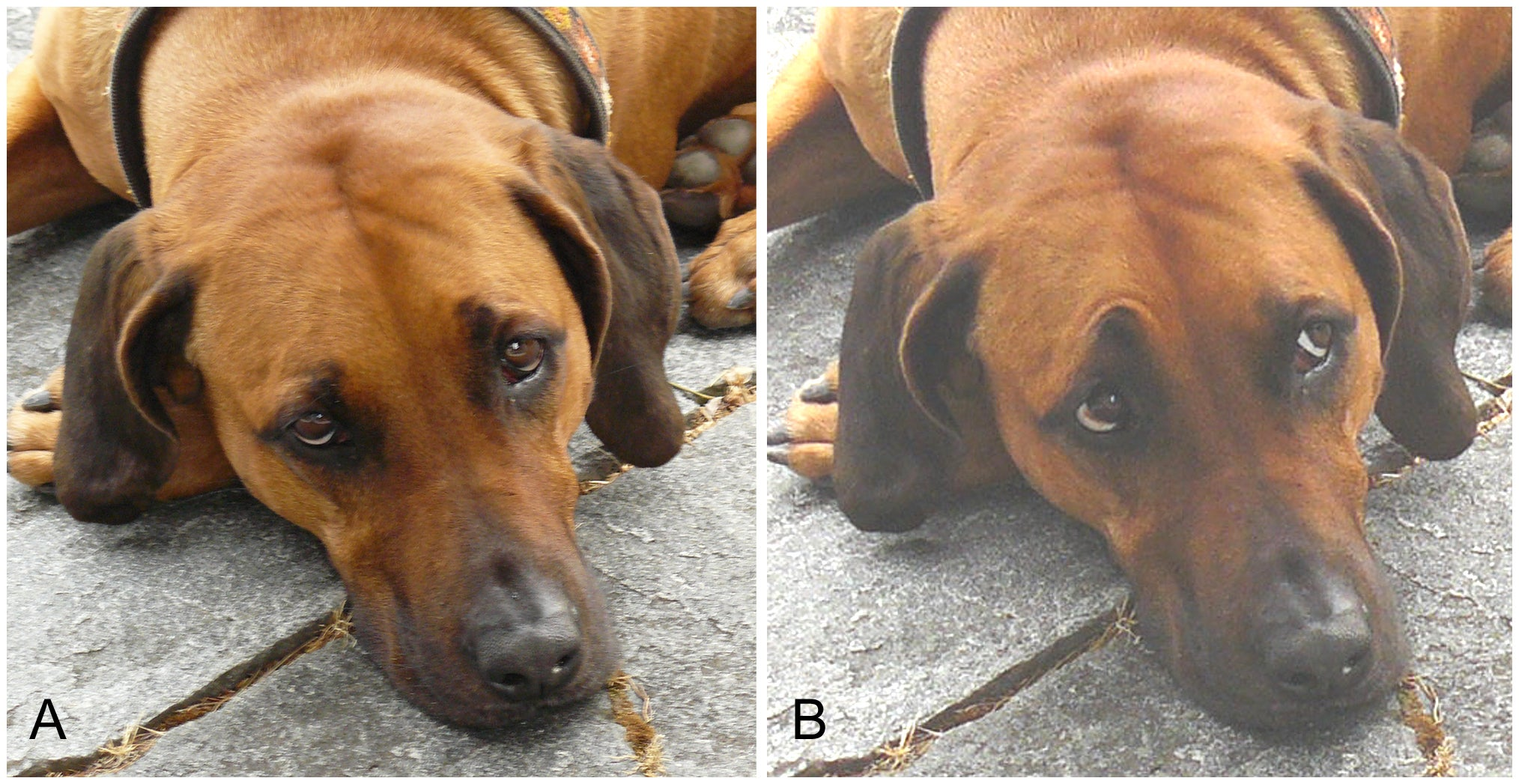 Studies Find Much To Measure In Dog Faces Scientific American Blog