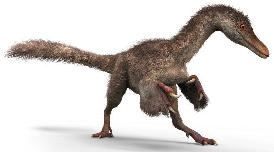 jaw on the floor entire chunk of feathered dinosaur discovered in