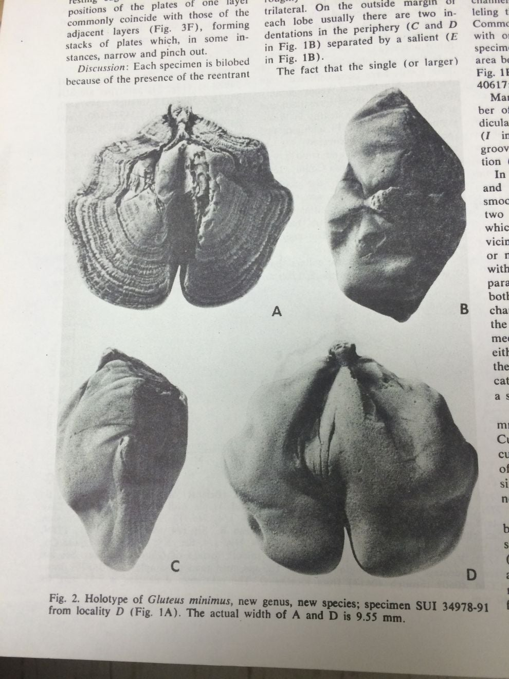 The Little Butts from Iowa - Scientific American Blog Network