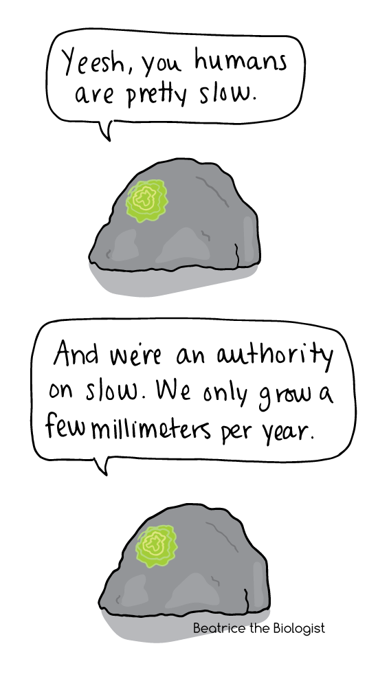 comic about lichens