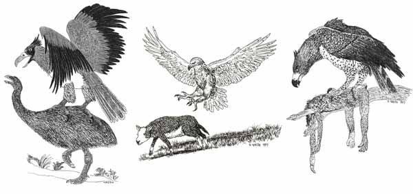 raptors-2018-Raptors-kill-big-animals-No