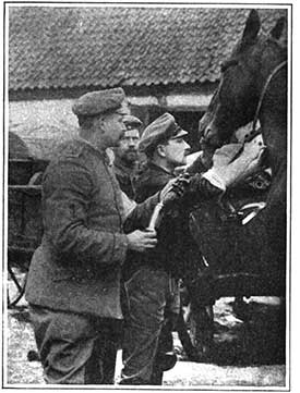 treatment for a horse. The drug was introduced in 1910 as a treatment ...
