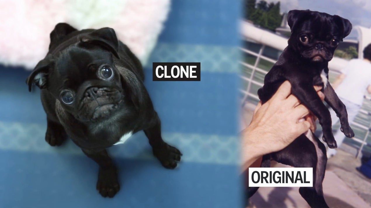 understanding what cloning really is and the different views about it People from all over the world from all sorts of different cultures and backgrounds are a part of the scientific community at some points in history.