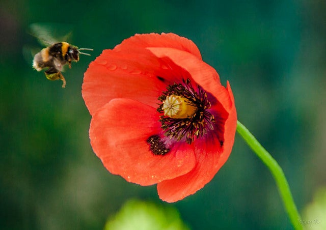 bees learn which flowers have pollen scientific american