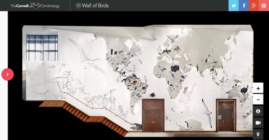 Screen Shot of Wall of Birds Interactive