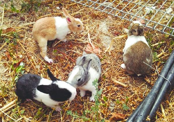 Skyview S Beagles Rabbit Cross Road April 9th 2016