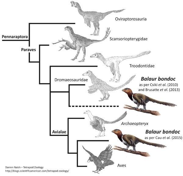 The Romanian Dinosaur Balaur Seems To Be A Flightless Bird