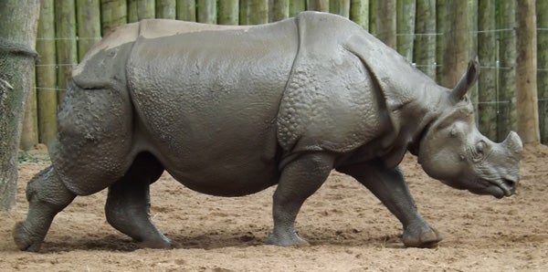 On World Rhino Day 2015, Some Things about Rhinos You Might