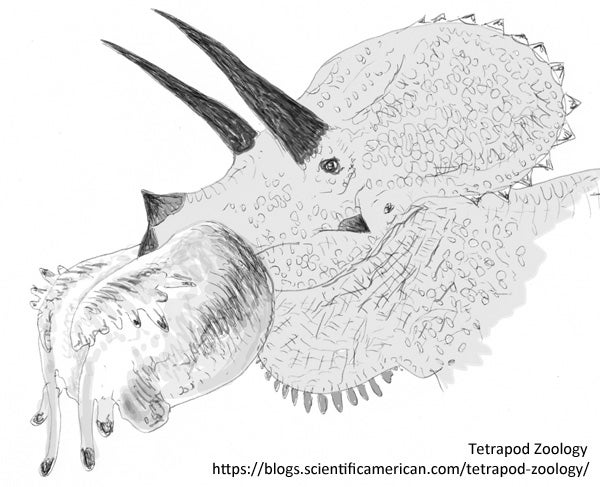 https://blogs.scientificamerican.com/blogs/assets/tetrapod-zoology/File/Triceratops-nose-balloon-coloured-small-600-px-tiny-Nov-2016-Darren-Naish-Tetrapod-Zoology.jpg