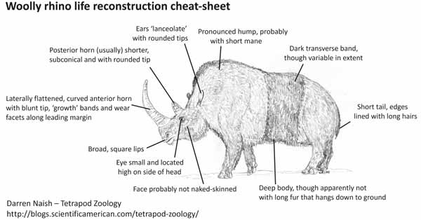 On World Rhino Day 2015, Some Things about Rhinos You Might Not ...