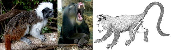 EVOLUTION disproved yet again?