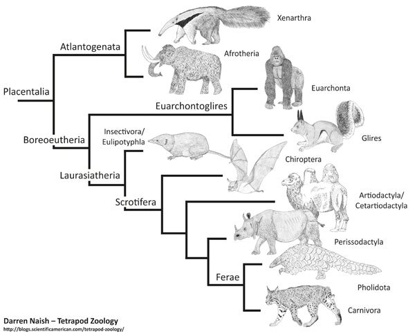 The Refined, Fine-Tuned Placental Mammal Family Tree ...  The Refined, Fi...