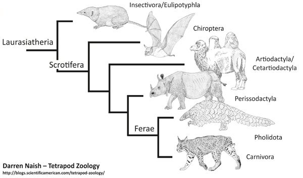 Sdl Diagram in addition Konfigurasi Rip V1 V2 Static Route Vlan Dan Stp likewise work Classification By  work also Surprises From Placental Mammal Phylogeny 1 Pangolins Are Close Kin Of Carnivorans additionally Best Practice Guide Supermuc Html. on tree topology