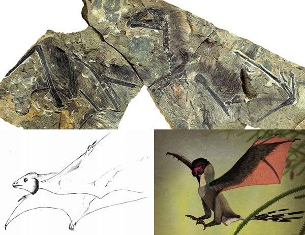 Custom essays essay help zoology