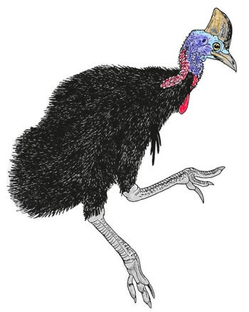 How Dangerous Are Cassowaries, Really? - Scientific American Blog ...