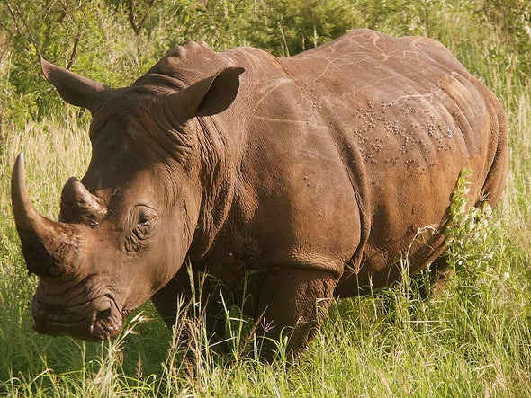 2015: Deadliest Year Ever for Rhinos