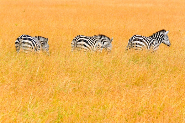 Don't Convert Africa's Savanna to Agricultural Land