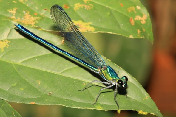 134 New Beetles and Dragonflies, Hiding in Plain Sight