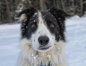 Why Some Dogs Hate Snow