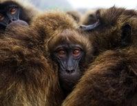 Life among the Monkeys