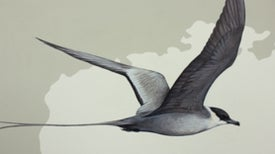 516 Bird Feet in 3,000 Square Feet