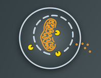 Autophagy, Illustrated