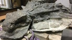 The Amazing, Inflatable Ankylosaur