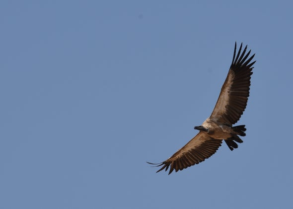 Vultures, Hippos and Anthrax