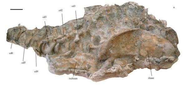 Paleo Profile: The Lo Hueco Titan