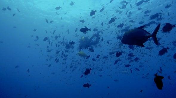 The Unusual Abundance of Ascension Island
